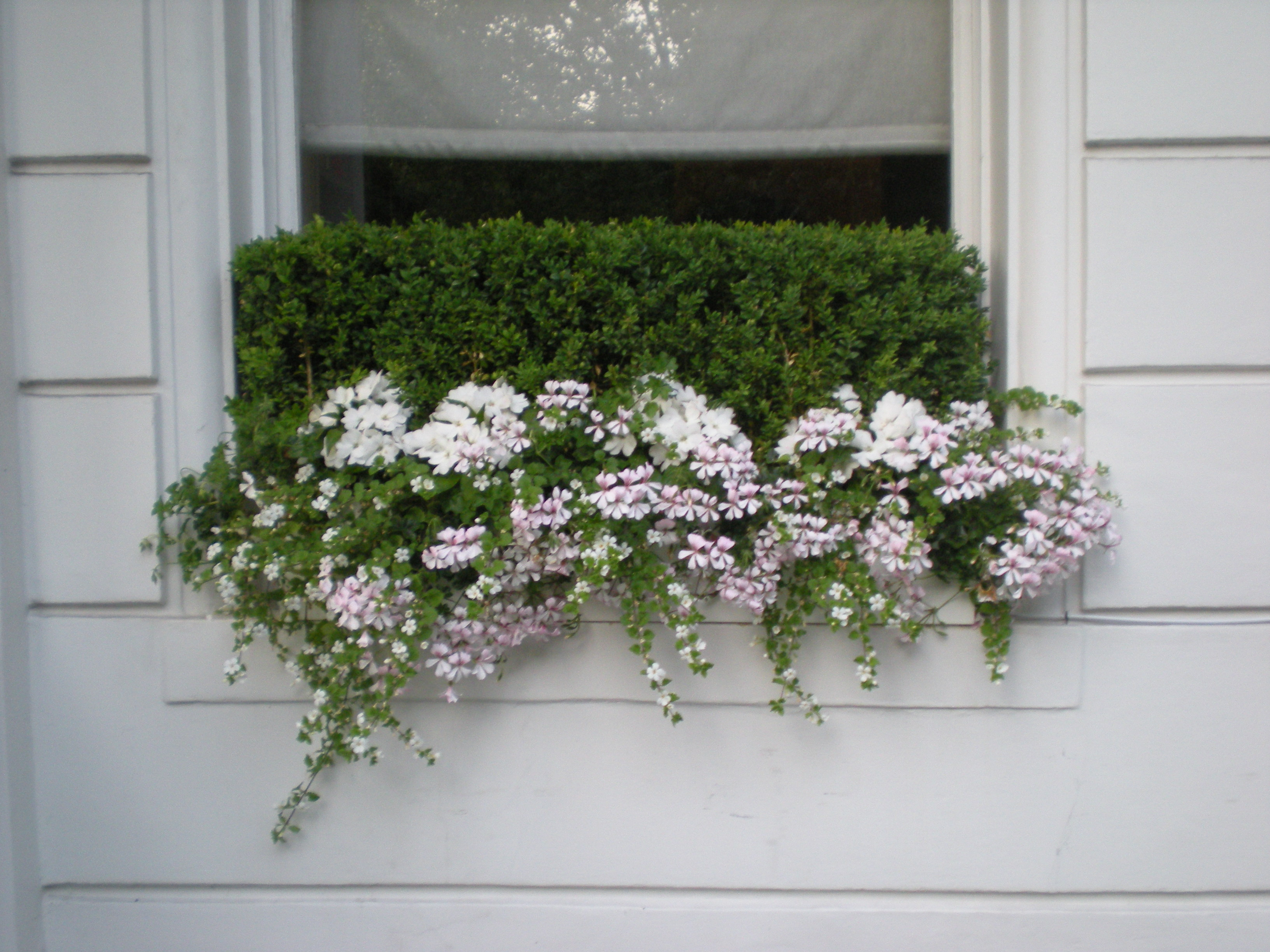 Window Box Design London